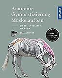 Anatomie, Gymnastizierung, Muskelaufbau: Die besten Übungen für Pferde am Boden