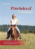 Pferdekauf für Anfänger: So finde ich zu meinem ersten eigenen Pferd