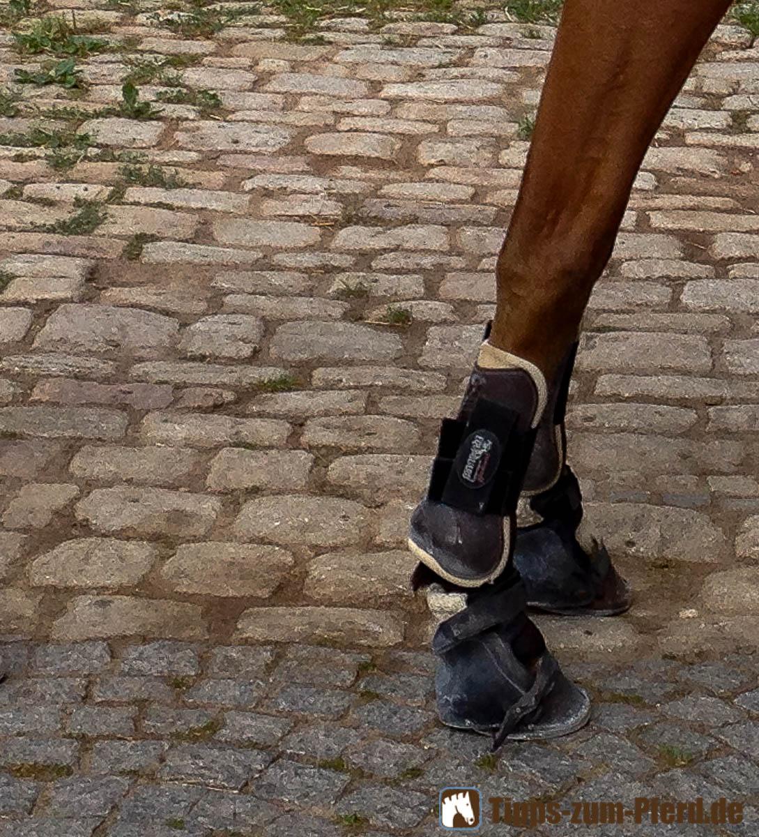 Ballenschutzschuhe am Pferd - (Foto: Franziska Goldmann)