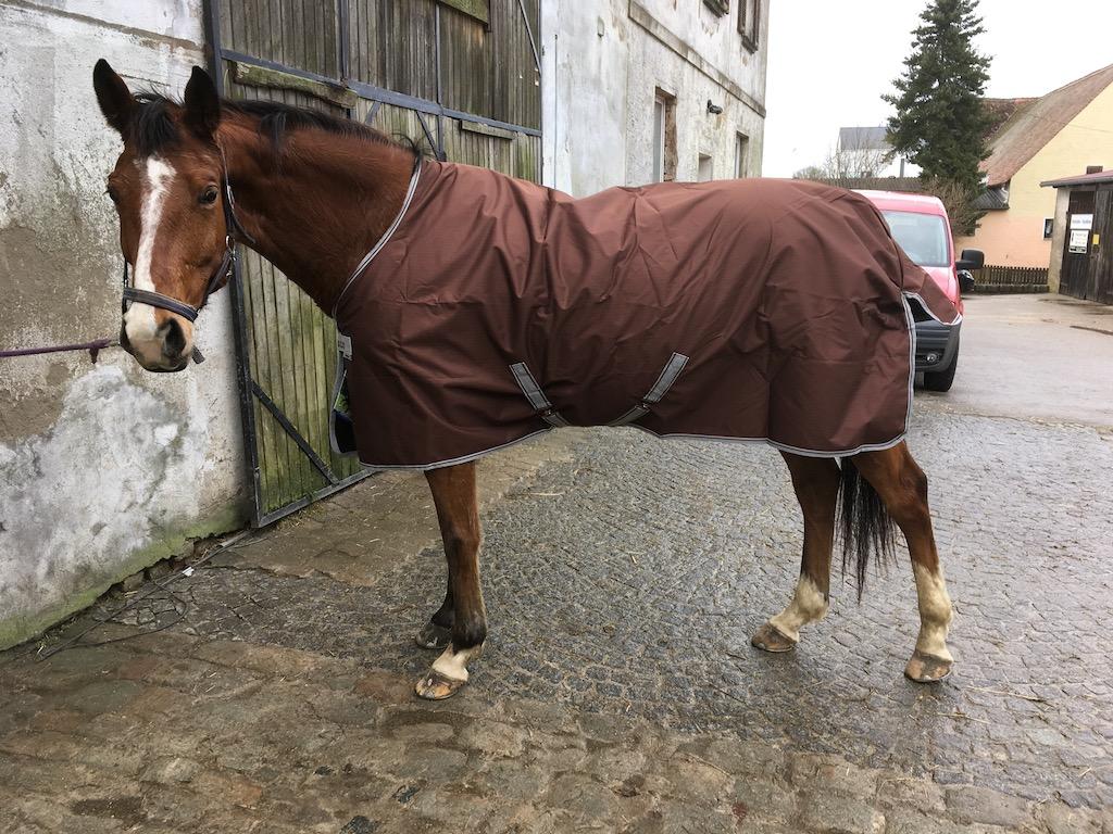 Ein braunes Pferd mit brauner Regendecke