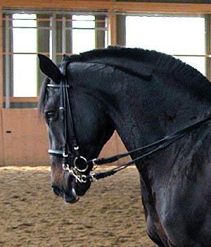 Ein Pferd mit Beizäumung