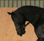 Das Pferd hängt auf dem Zügel