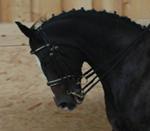 Dieses Pferd ist aufgerollt
