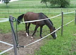 Das Pferd sollte sich auf der Koppel entspannen
