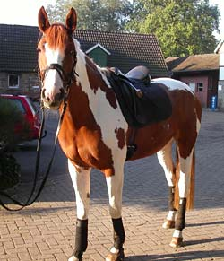 Ein junges Pferd