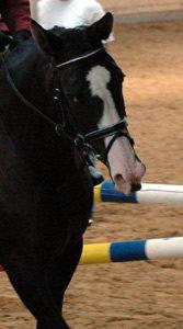 Ein verworfenes Pferd