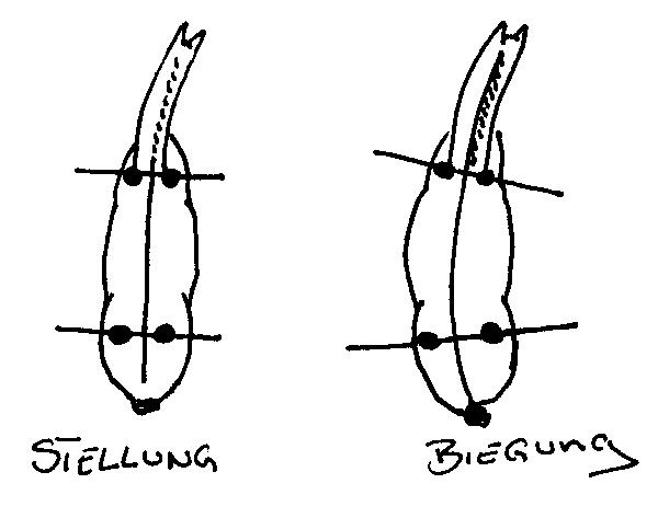 Der Unterschied zwischen Stellung und Biegung