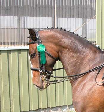 Welche Frisur Für Welches Pferd Bei Turnier Und Vorführung Tipps