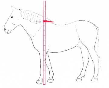 die gr e von pferd oder pony messen das stockma tipps zum pferd. Black Bedroom Furniture Sets. Home Design Ideas