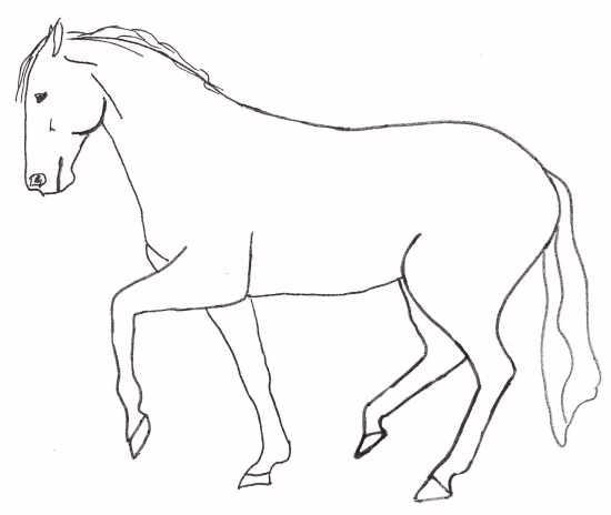 Pferd in der Piaffe