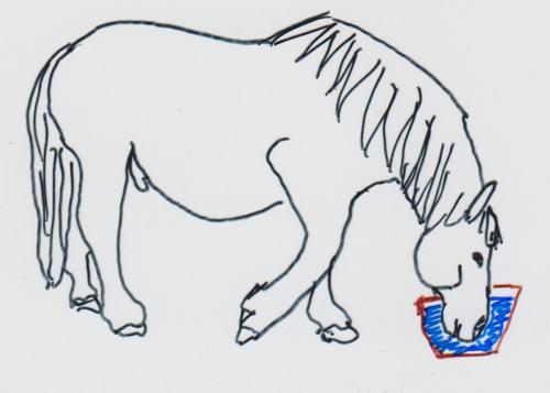 Pferd mit Dummkoller beim Trinken