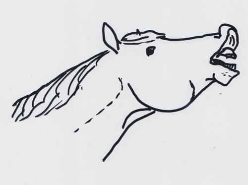 Ein flehmendes Pferd