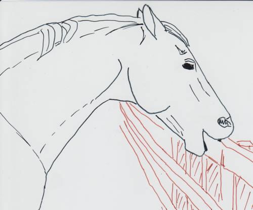 Pferd beim Koppen
