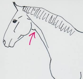 Pferd nach einer Kopper-OP