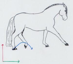 Ein Pferd im Arbeitstrab