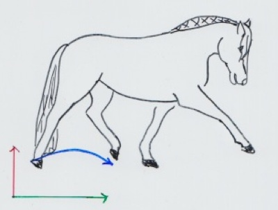 Pferd im Mitteltrab