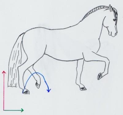 Ein Pferd im versammelten Trab