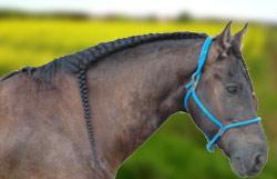 Pferd Einflechten Spanischer Zopf Tipps Zum Pferd