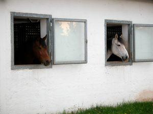 Boxen sollten ein Fenster nach draußen haben - (Foto: Martin Goldmann)