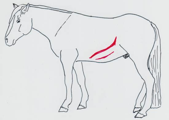 Presst das Pferd die Luft mit Kraft aus der Lunge entsteht die sogenannte Dampfrinne - (Foto: Franziska Goldmann)