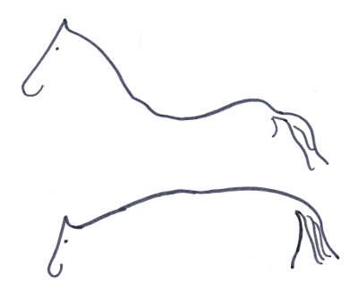 Die Rueckenlinie eines Pferdes verändert sich mit der Haltung