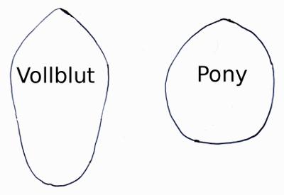 Die Runmpfform von Vollblut und Pony