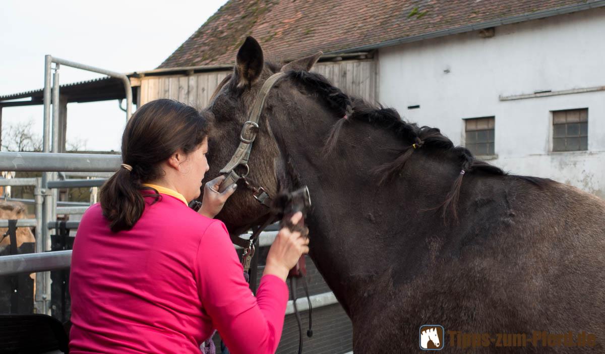 franziska beim scheren von macy - Pferd Scheren Muster