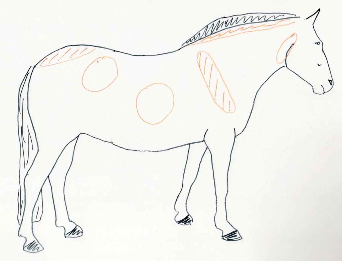 Pferd zu dick - (Foto: Franziska Goldmann)