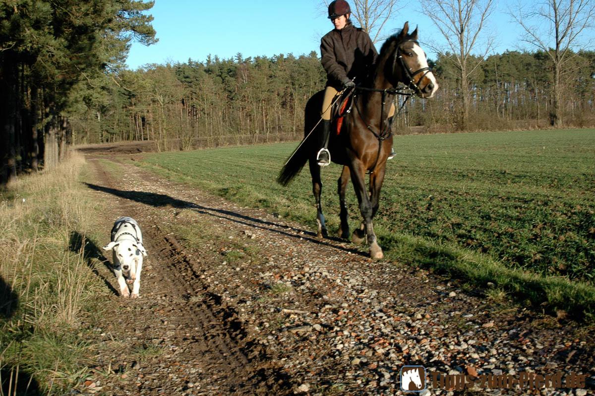 Apple Pie und Nelson auf Feldweg