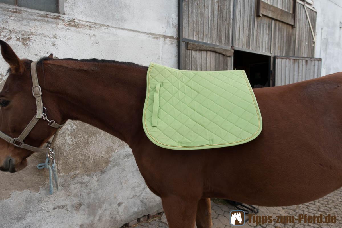 Die Satteldecke kommt erst einmal alleine auf das Pferd - (Foto: Franziska Goldmann)