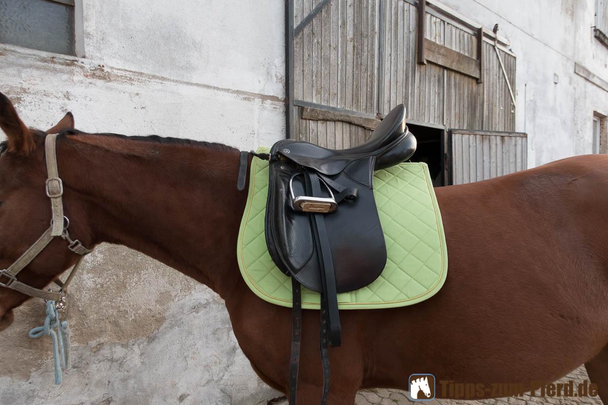 Platzieren Sie den Sattel vor der Sattellage auf dem Pferd - (Foto: Franziska Goldmann)