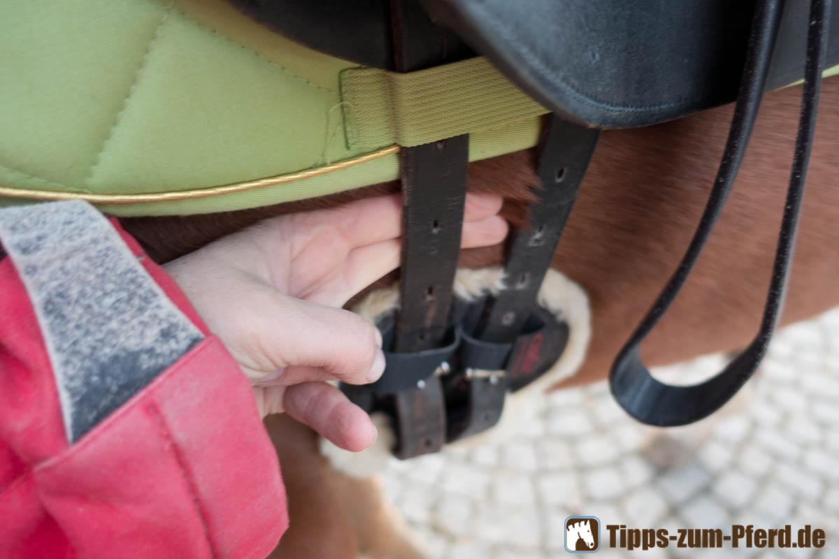 Zwischen Gurt und Pferd sollten noch zwei Finger passen - (Foto: Franziska Goldmann)