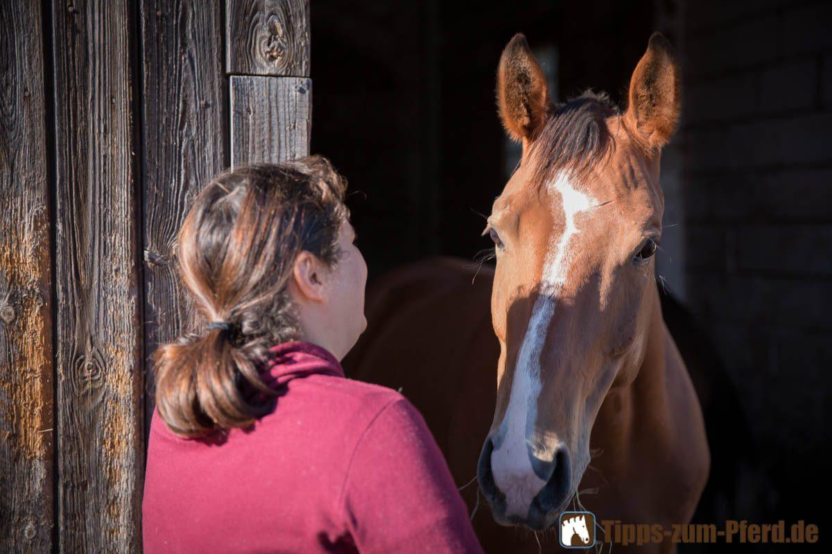 Abwechslungsreiches Training für motivierte Pferde