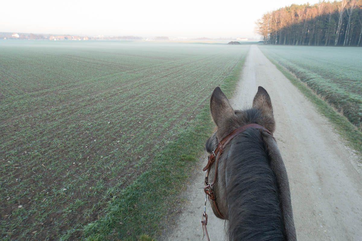 Ausreiten – mit dem Pferd in die Natur – Tipps