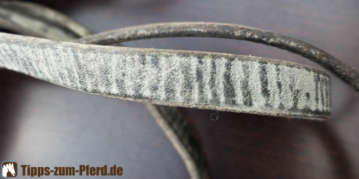 Hervorragend Leder: Schimmel reinigen - Tipps zum Pferd GH48