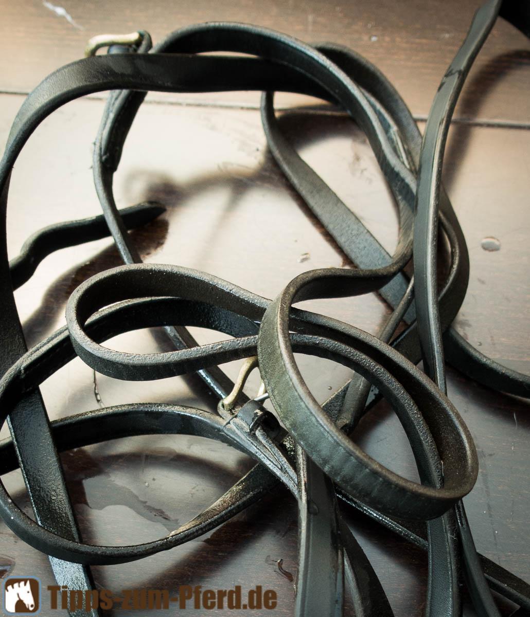 Häufig Leder: Schimmel reinigen - Tipps zum Pferd XR14