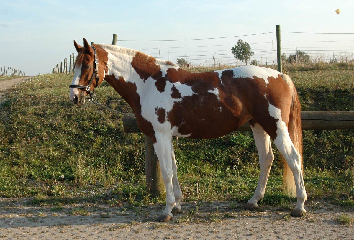 tipps zum pferd tipps rund um reiten und pferde western. Black Bedroom Furniture Sets. Home Design Ideas