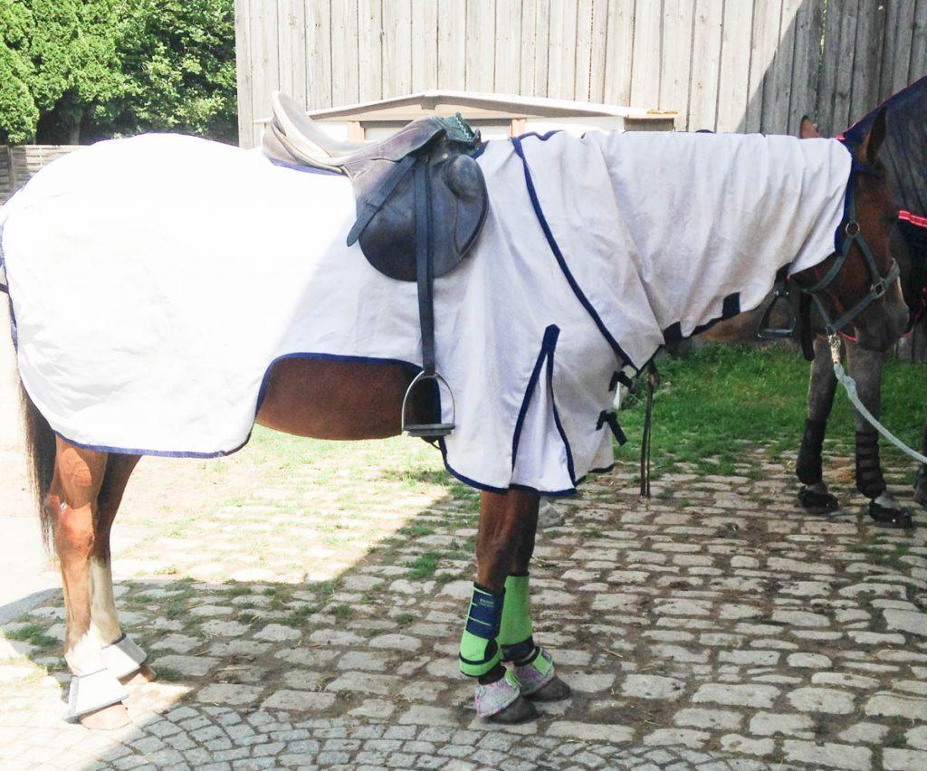 Die Fliegenausreitdecke sieht zwar etwas komisch aus, schützt das Pferd aber vor den meisten Plagegeistern in Insektenform (Foto: Franziska Goldmann)