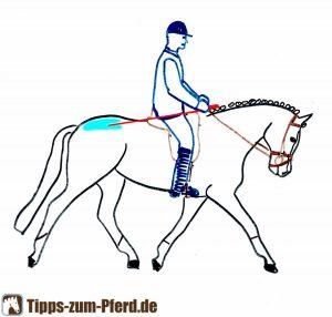 Im blau markierten Bereich können Sie das Pferd auf der Kruppe anticken.