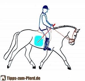 Blau markiert ist der Bereich, in dem Sie das Pferd an der Flanke anticken können.