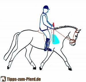 Die richtige Stelle, um das Pferd mit der Gerte an der Schulter anzuticken.