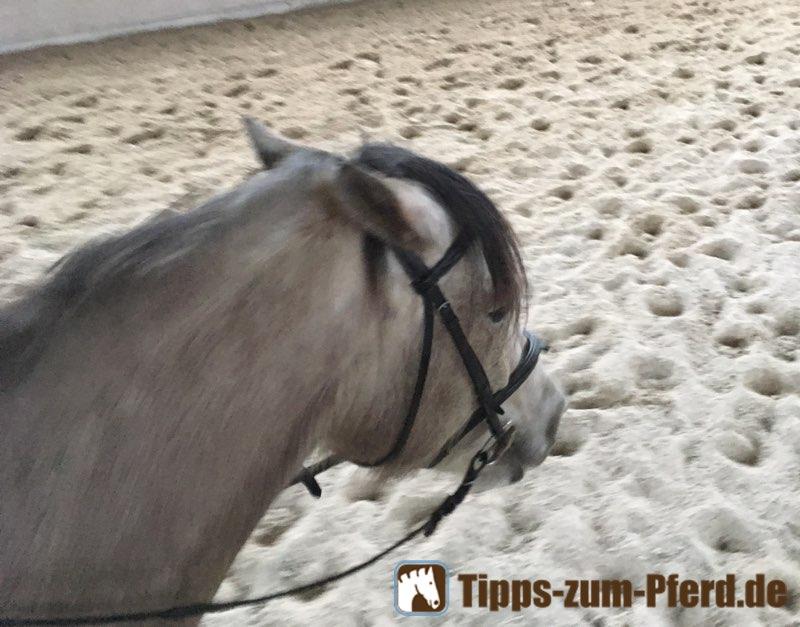 Pferd giftet: Weißes Pferd mit angelegten Ohren