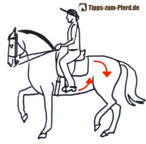 Versammeltes Pferd mit Reiter. Pfeilezeigen den Verkürzten Bauch und die gesenkte Kruppe